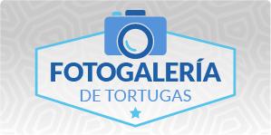 Comuna de Tortugas
